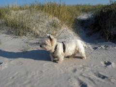 st-peter-ording-badespass-mit-hunden-1
