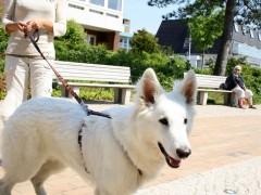 st-peter-ording-mit-hunden-1